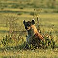 J8 : Route Nakuru / <b>Masai</b> <b>Mara</b> (28/07)