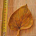 feuilles en céramique