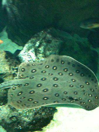aquarium avril 2012 223