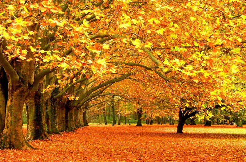 The_Break_Of_Autumn_by_inextremo