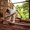 Actualités - Nouveaux <b>circuits</b> : du cacao en agroforesterie