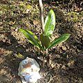 Auprès de mon arbre chez Mamitta