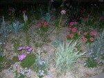 fleurs_by_louisianne
