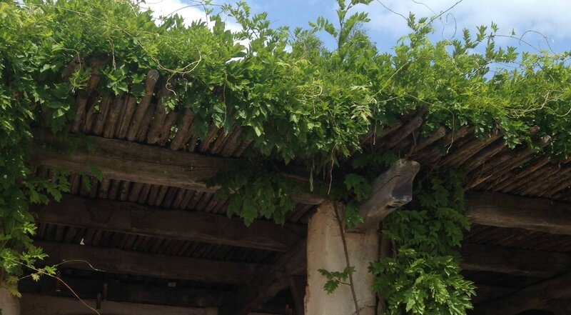 Verdure grecque