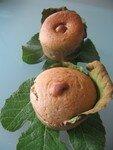 muffin_figue