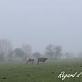 Marche dans la brume...