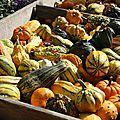 Boîtes à goûter et activités d'automne