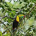 Oiseaux du Costa <b>Rica</b>