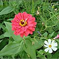 ≈ …Une p'tite fleur oubliée...≈ …
