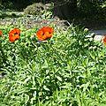 <b>Jardin</b> botanique