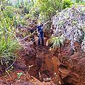 23 - GRESLANIA RIVULARIS - Les bambous endémiques de <b>Nouvelle</b>-<b>Calédonie</b>