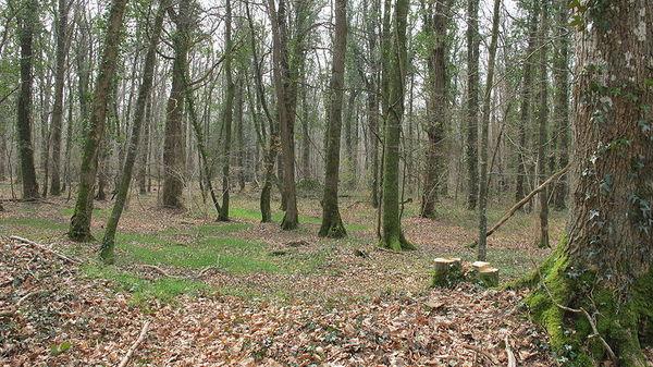 800px_Bois_Ardennes_3