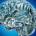 Désencoder les impressions mnésiques du <b>cerveau</b>.