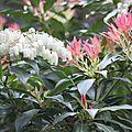fleurs sauvages et domestiques