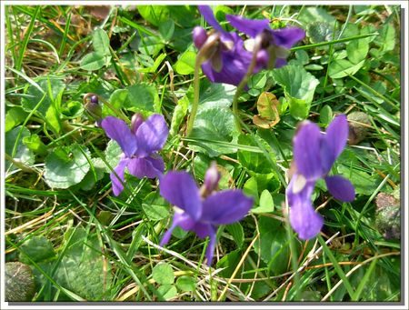 printemps_11_005