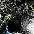 Arachnologie en forêt de Fontainebleau