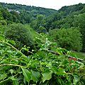 Domaine <b>Buisson</b>-<b>Charles</b> : Bourgogne blanc 2014 et Vaudoisey-Creusefond : Pommard Charmots 2005