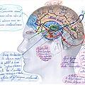 Découverte d'une base de données de réference dans le <b>cerveau</b>.