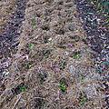 16 OCTOBRE - Non, le jardinage, ça n'est pas terminé...