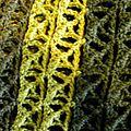 On japanese crochet road