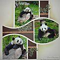 Retour avec Panda !!!!!