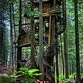 Tree <b>houses</b>