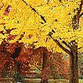 Couleur D'automne Jardin Public <b>Bordeaux</b>