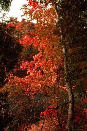automne_flamboyant