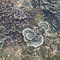 <b>Bali</b> : premières plongées : Gili islands