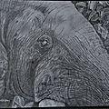 Regard d'éléphant,