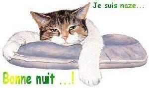 suis_naze_bonne_nuit