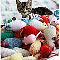Bien-être : Les jouets pour chat