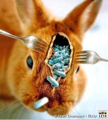 Germes résistants aux antibiotiques dans les volailles