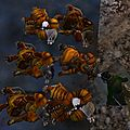 Guild Wars 2 ~ Les Charrs, ces <b>comiques</b> !