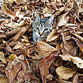 Proteger les chats pendant l'hiver