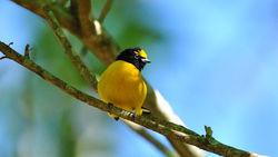 Oiseaux d'Argentine