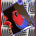 Journal de socialisation d'une femelle <b>ECLECTUS</b>