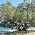 lovely days in Greece !