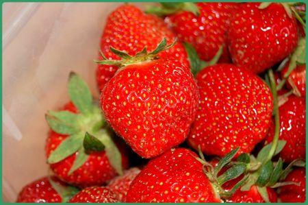 fraises_2