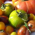 <b>Tomates</b> anciennes plans KOKOPELLI