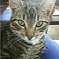 [GRIF'Ecoute] Un <b>petit</b> garçon pleure son chaton victime d'un oscillo-battant !