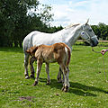 Liste de chevaux <b></b> <b>vendre</b>