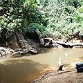 Parc national de la forêt de Taï