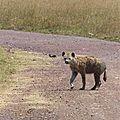 <b>Hyènes</b> 2 - Afrique de l'Est