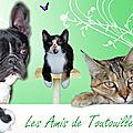 Les <b>amis</b> de Toutouille !