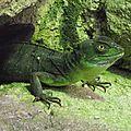 Le <b>Basilic</b> vert