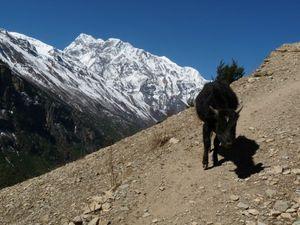 Trek Annapurna FZ28 - 0484