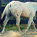 Les chevaux et moi :)