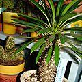 cactus 17