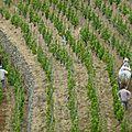 Initiation Travail du sol dans les vignes - RéPARATA - Drome